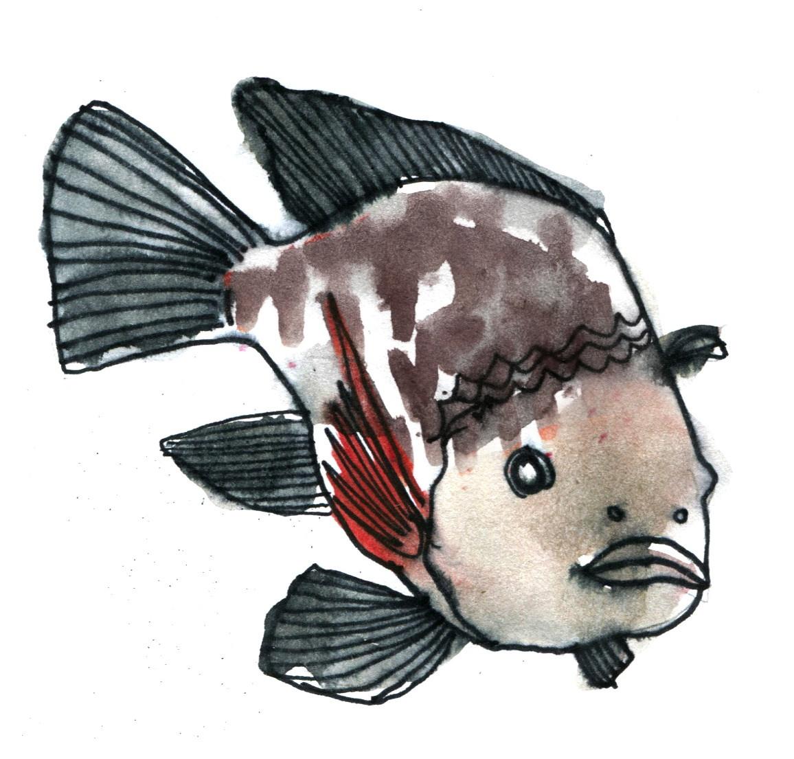 The Fish Ethology Database goes on
